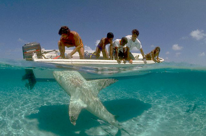 shark-beaches-06-g.jpg
