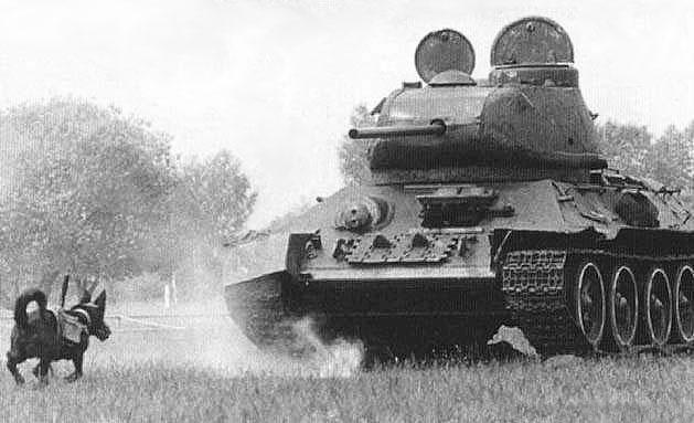 Derrivar tanques alemanes. Método: COMO SEA. Dog_mine