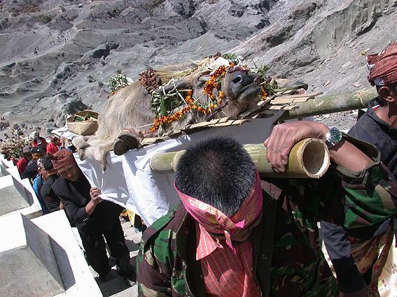 kecil-sasaji-kasada-2007