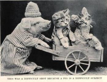 harry whittier frees piglet kittens-thumb